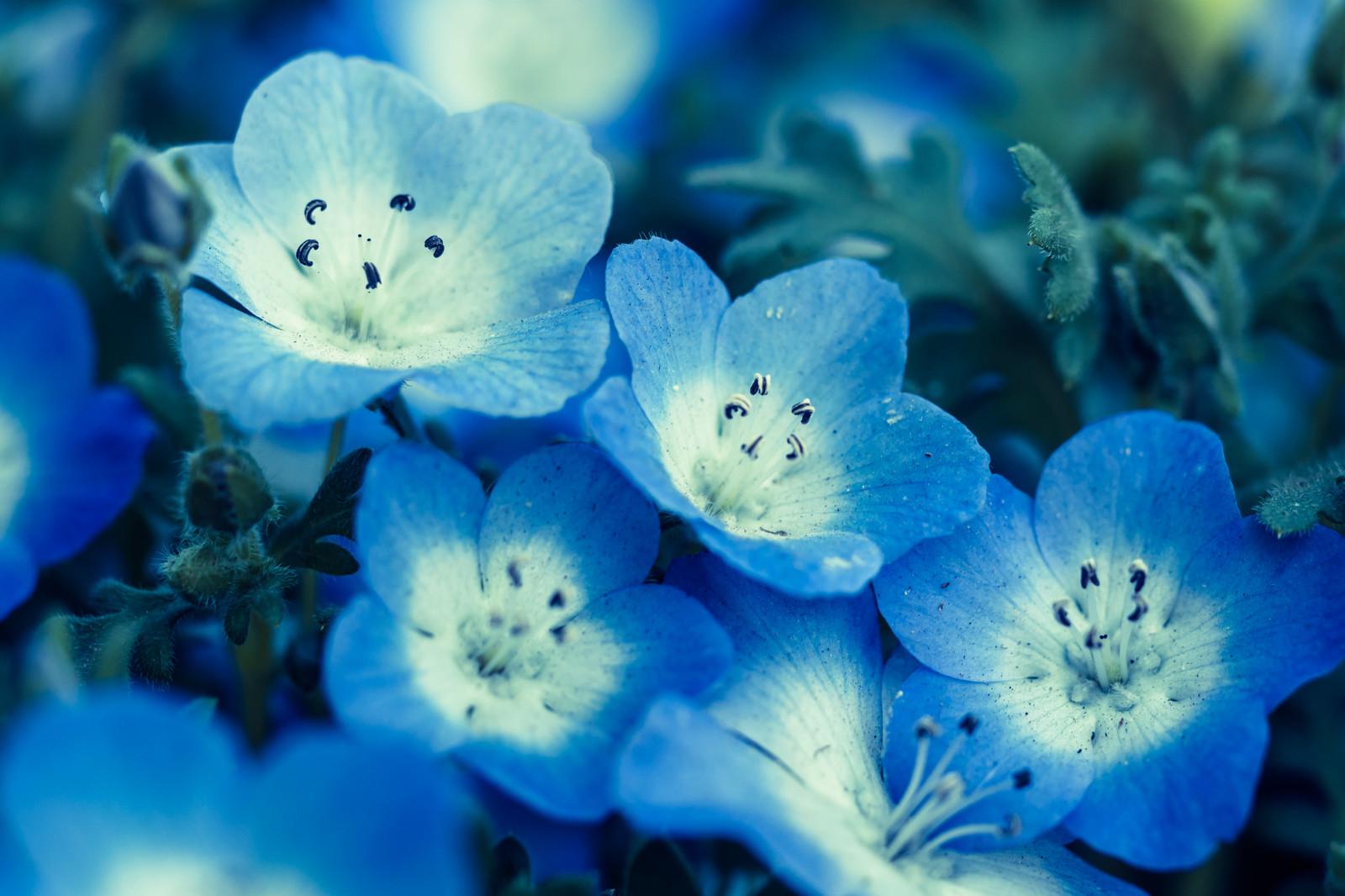 【ジブリの詰め合わせ!?】デート的映画批評#3「メアリと魔女の花」【賛否両論】