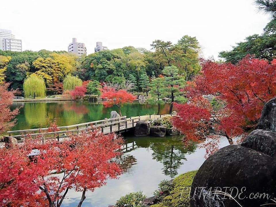 【徳川園】広大な敷地と日本庭園を楽しむ!徳川園の紅葉デート【名古屋市東区】