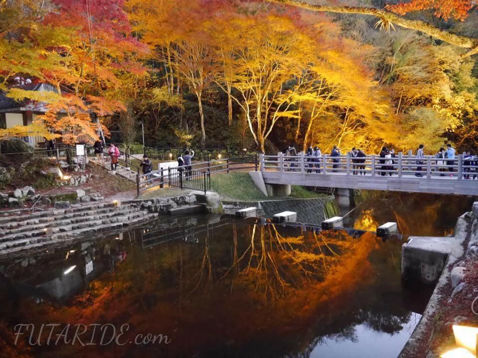 【岩屋堂公園】幻想的な紅葉のライトアップ!紅葉の見頃・駐車場・渋滞情報まとめ【瀬戸市】