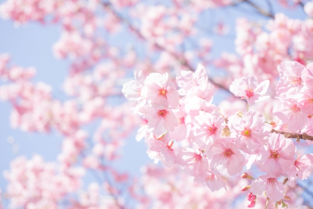 【お花見デート】必読!お花見が成功する持ち物リスト8選